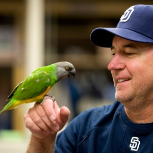 Todd Hutcheson and Buddy (Senegal Parrot)